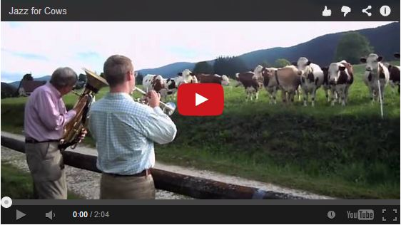 They pulled over to play jazz for the cows.